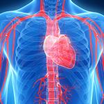 心不全患者へのASV陽圧換気療法は死亡を増大/NEJMのイメージ