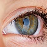 ROCK阻害薬と培養細胞の注入で、角膜内皮細胞が再生/NEJMのイメージ